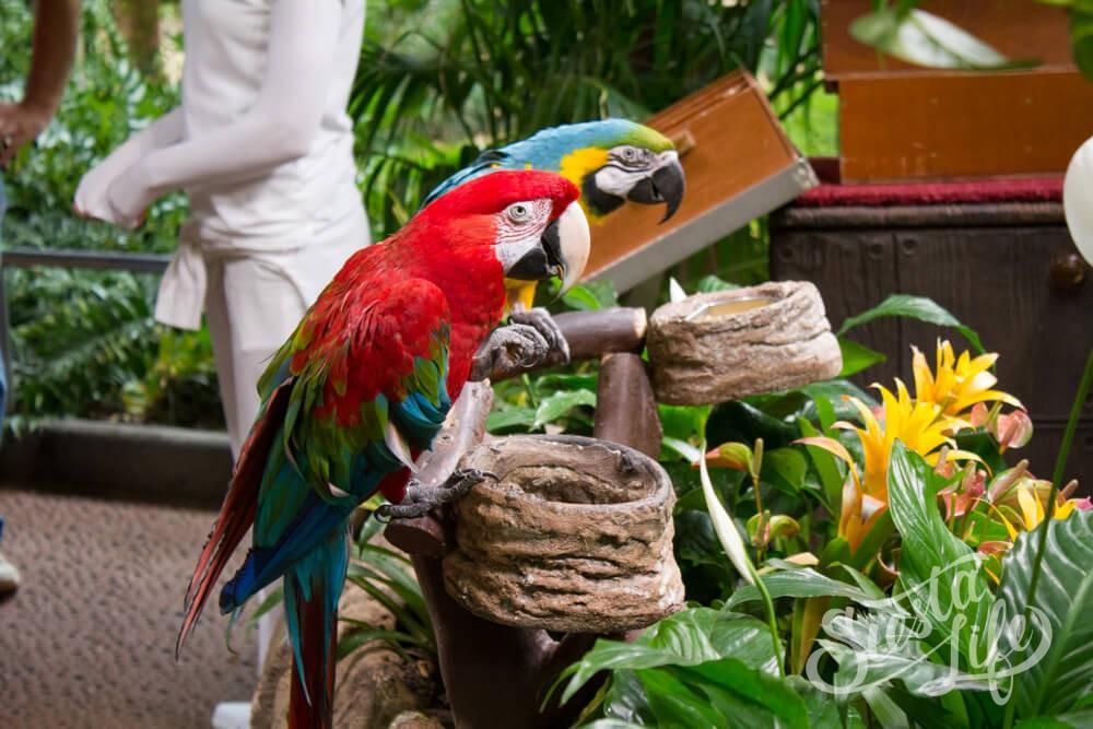 Попугаи в Лоро-парке