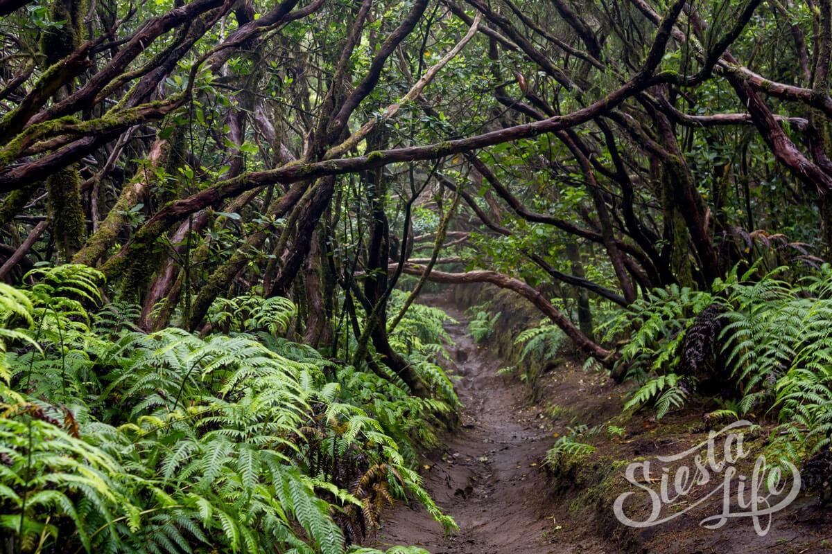 Пеший маршрут по лесу Анаги