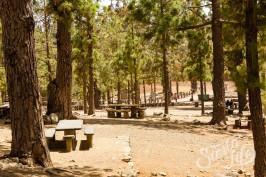 Пикник на Тенерифе — под деревьями расположились большие столы и лавки