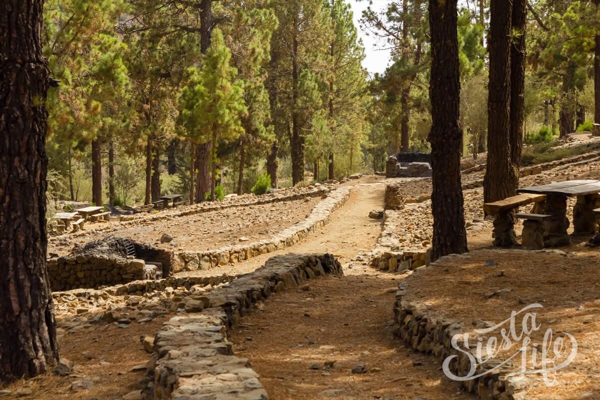 Пикник — выложенные дорожки посреди леса