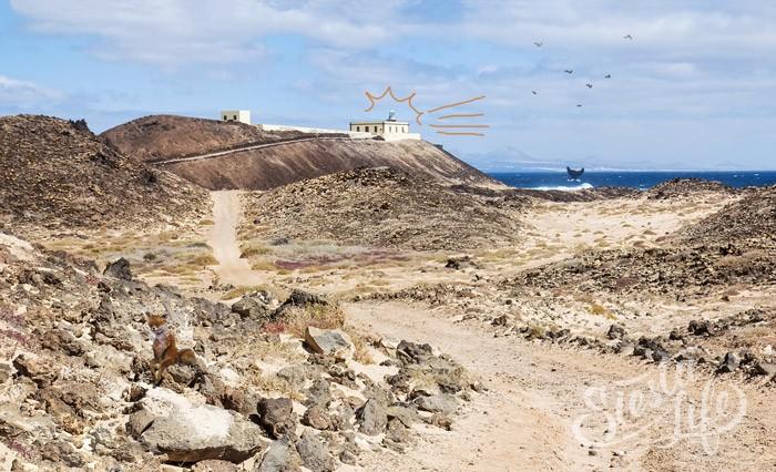 Лобос — необитаемый остров, примерно в 2-х км. от острова Фуэртовентура