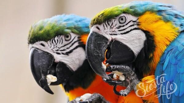 Попугаи в Лоро-Парке на острове Тенерифе