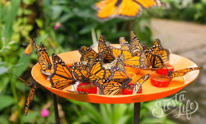 Mariposario del Drago — парк бабочек на острове Тенерифе