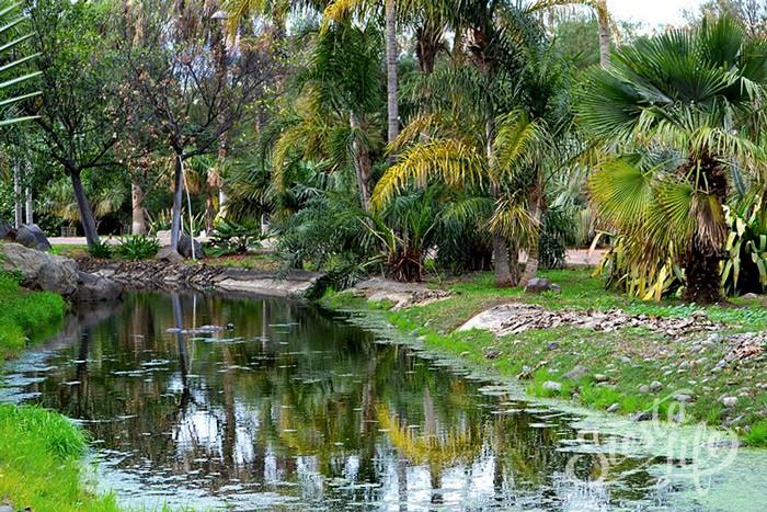 Парк-ботанический сад Пальметум (исп. Palmetum)