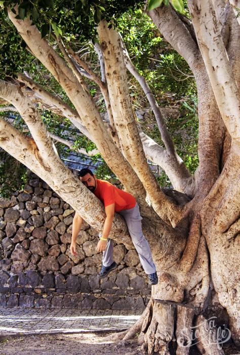 Павел на дереве в Маске на Тенерифе