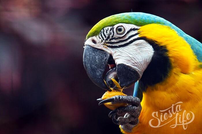 Попугай из Лоро-парка