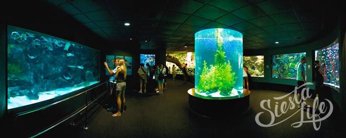аквариумы в Лоро-парке