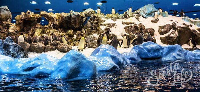 пингвины в Лоро-парке