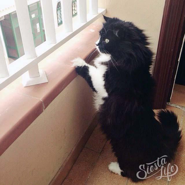 Барсик на балконе