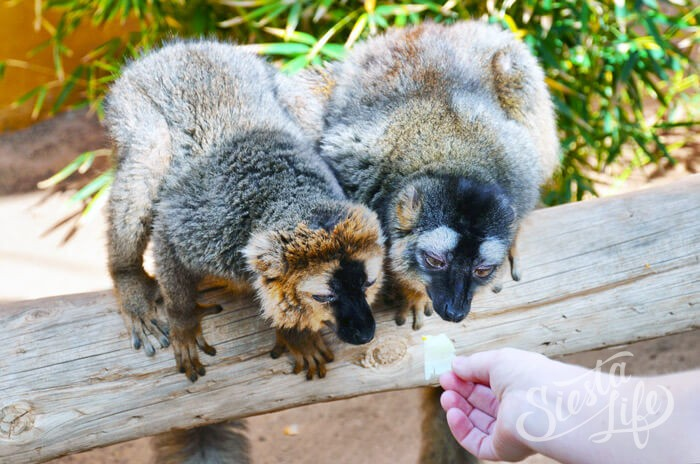 Покормить животных в Манки Парке на Тенерифе