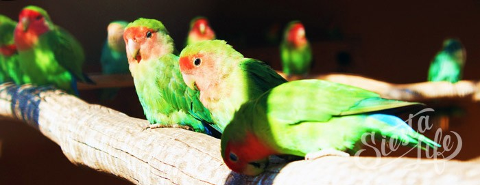 Попугаи в Манки Парке на Тенерифе
