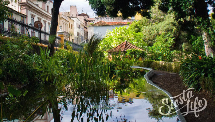 Ботанический сад в Ла-Оротава